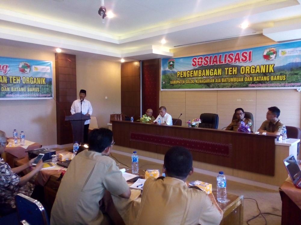 Kegiatan Pemerintah terkait pengembangan teh organik di Kabupaten Solok.