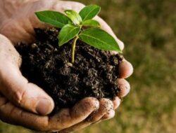 Pemkab Agam Sebar 39 ribu Bibit Tanaman Produktif