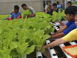 Manfaatkan Pekarangan Untuk Greenhouse