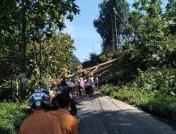 Pohon Tumbang Halau Arus Mudik Sumbar-Sumut