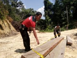 Diduga Ada Illegal Logging di Payung Sekaki, Solok