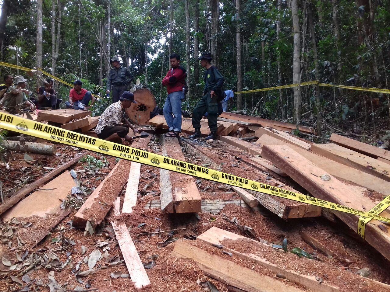 Lokasi penemuan kayu di kawasan Rimbo Pulieh, Dusun Tanjuang Manjulai, Nagari Simanau, Kabupaten Solok. Foto : Fernandez