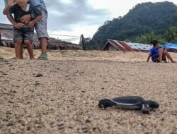 Anak Lepasliarkan Tukik dan Bersih Sampah Sambut Tahun Baru
