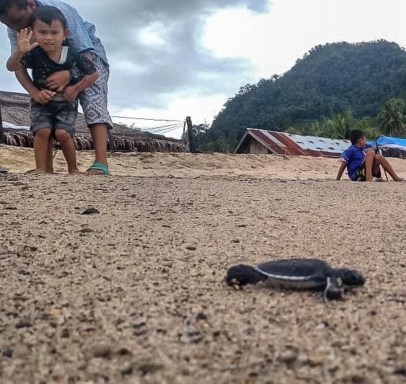 seorang anak melambaikan tangan saat melepas tukik di pantai Sungai Pinang, Koto XI Tarusan, Pesisir Selatan/ IG @tanharimage
