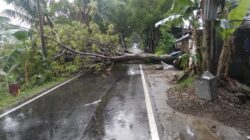 Salah satu pohon tumbang menutupi badan jalan di kawasan Simpang Haru, Padang, Sabtu 22 Juni 2019. Foto : Istimewa
