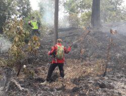 Tujuh Hektar Lahan Pinus di Tanah Datar Terbakar