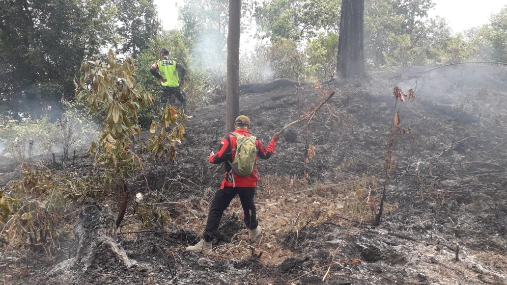 Kebakaran lahan hutan pinus di Bukit Pinang Gadiang, Jorong Rajo Dani, Nagari Padang Ganting, Kabupaten Tanah Datar. Foto : Istimewa