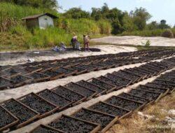 BUMNag Mutiara Mandiri Ekspor Arang dari Batok Kelapa hingga Eropa