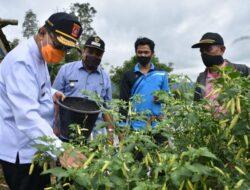 Pastikan Ketersedian Bahan Pokok, Bupati Agam Pantau Lahan Pertanian Masyarakat