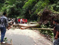 Lalu Lintas Simpang Panta – Ngarai Sianok Macet Akibat Pohon Tumbang
