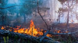 Diduga Ceroboh, Tujuh Hektar Hutan Lindung di Harau Terbakar