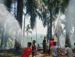 Satu Hektar Lahan Sawit di Agam Terbakar