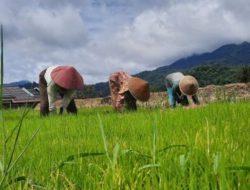 Gubernur Sumbar Minta BPKP Dorong Sinkronisasi Pembangunan Pertanian
